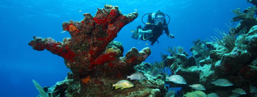 Open Water Diver