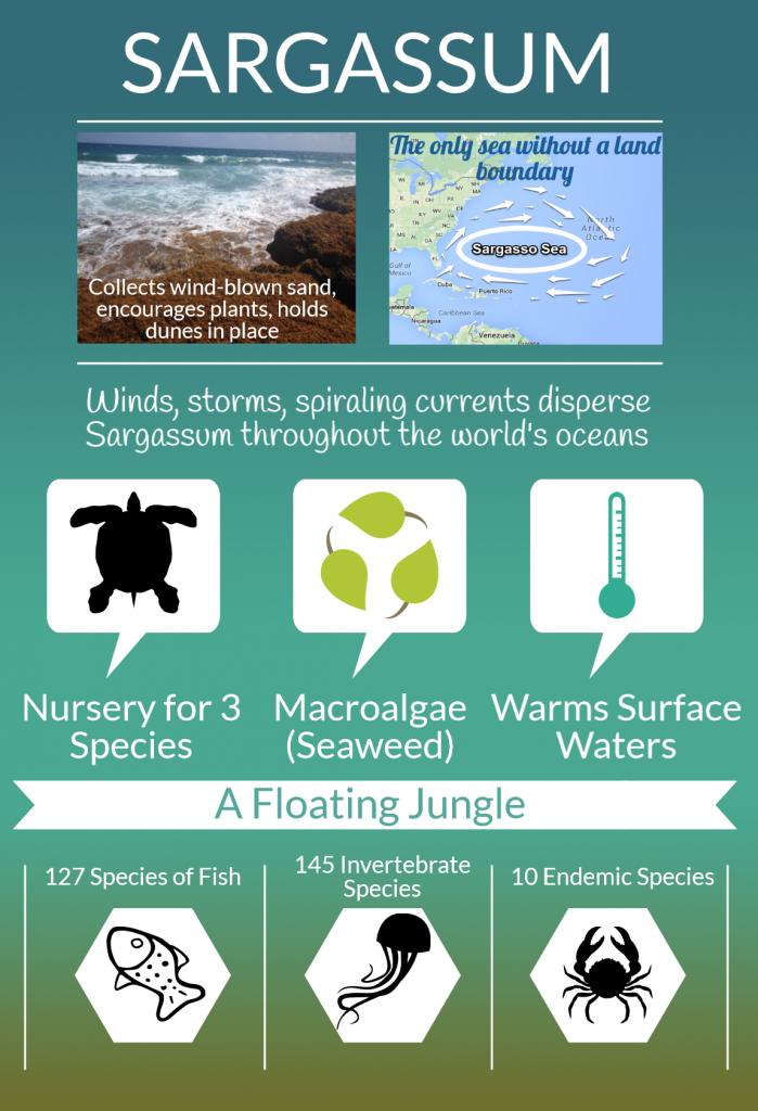 Akumal Dive Shop, Riviera Maya | Sargassum: The What, Where